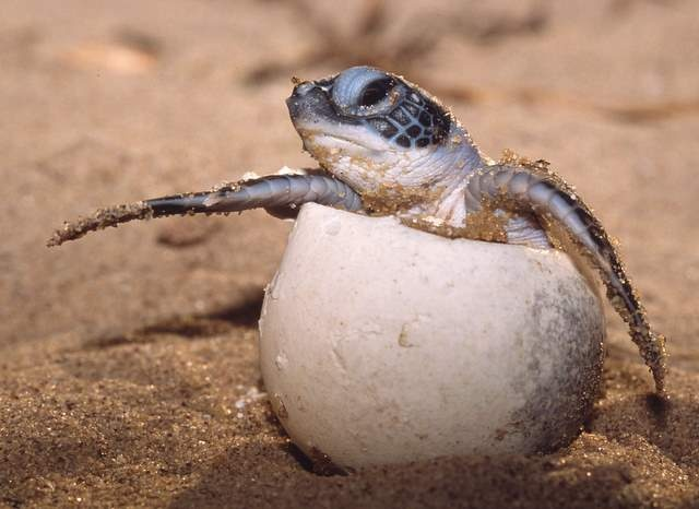 How To Be Part Of Queensland's Best Kept Secret: Turtle Births